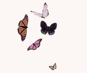 background, butterfly, and spring image