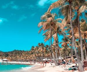 exotic, hawaii, and palm tree image