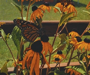 butterfly and sunflower image