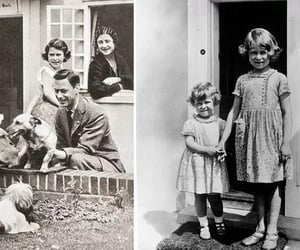dogs, royal, and family image