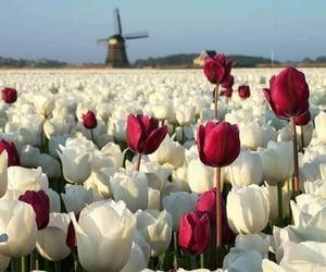 fiori, flowers, and primavera image