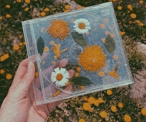 flowers, cd, and aesthetic image