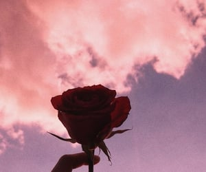 clouds, roses, and sunset image