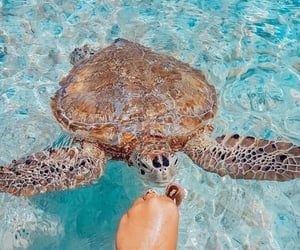 aesthetic, sea, and turtle image
