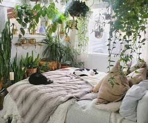 cat and plants image