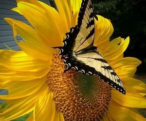 butterfly, spring, and live. love image