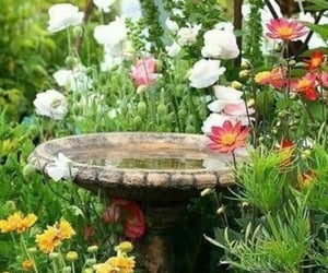 bird bath and flowers image