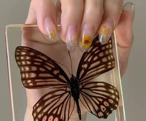 butterfly, nails, and tumblr image