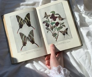 aesthetic, antique, and book image