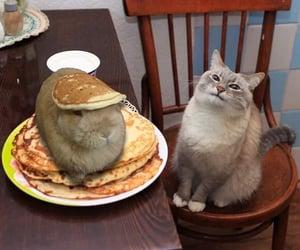 Animales, cutie, and feline image