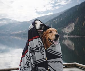 dog, dogs, and landscape image