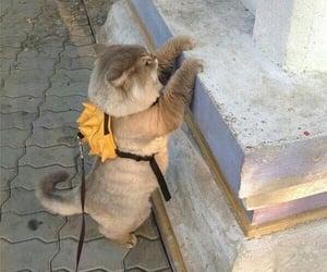 Animales, cutie, and kitties image