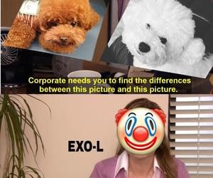 exo, sehun, and exo-l image