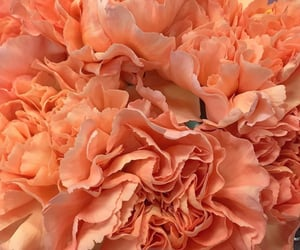 flowers and peach image