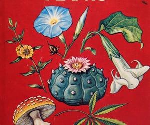 plants, drugs, and mushroom image