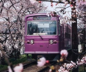 japan, sakura, and spring image
