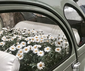 flowers, car, and daisy image