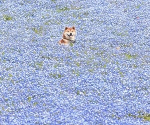flowers, dog, and aesthetic image