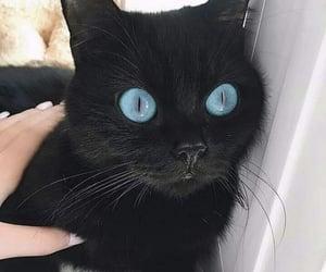 black, blue, and blue eyes image