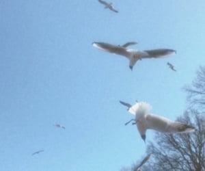 birds, blue, and sky image