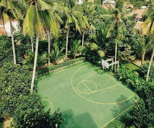 Basketball, garden, and green image