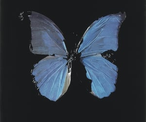 blue, butterfly, and tumblr image