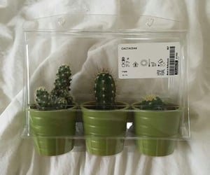 aesthetic, green, and cactus image