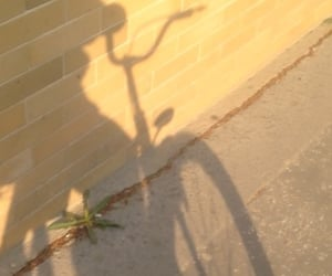 bicycle, daylight, and shadow image