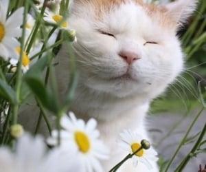 animals, feline, and love image