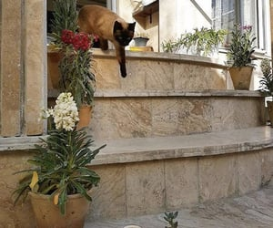 aesthetics, cats, and plants image
