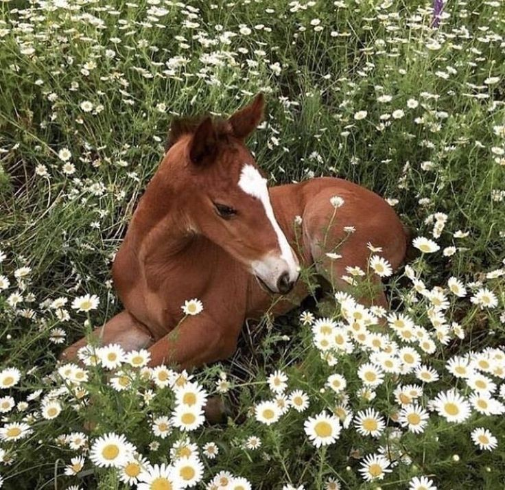 Green And White Spring Theme Whit Cute Baby Horse