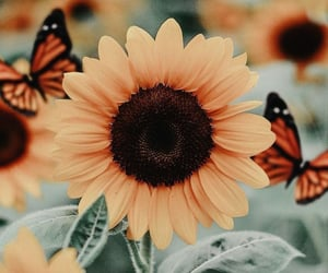 flowers, sunflower, and butterfly image