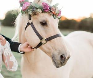 animals, beautiful, and fairytale image