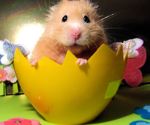 cute and hamster image