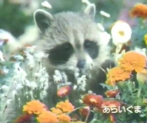 raccoon and flowers image