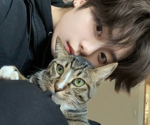 cat, ulzzang, and cute image
