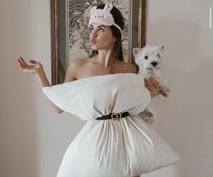 dog, fashion, and pet image