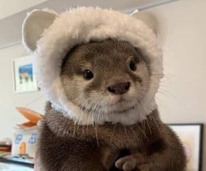 animal, otter, and cute image