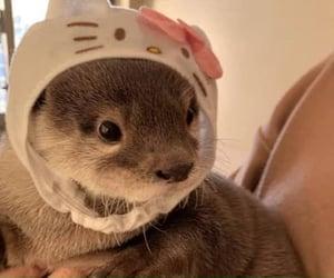 animal, hello kitty, and otter image