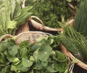 green and herbs image