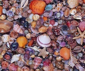 shell, seashells, and beach image