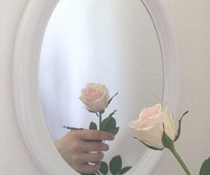mirror, rose, and reflection image