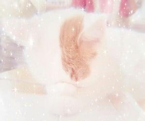 cat, 🐬, and feeds.nala.flora image