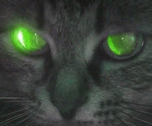 cat, aesthetic, and eyes image