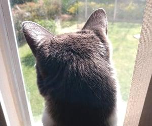 cat, gato, and love image