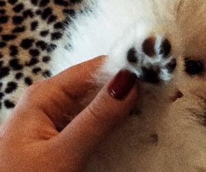 boo, dog, and pomeranian image