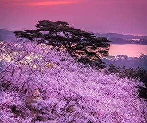 purple, sunset, and love image