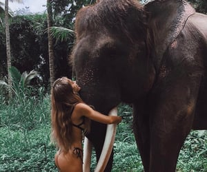 blond girl, elefant, and sweet image