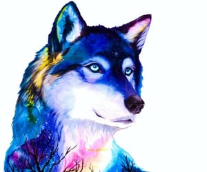 nature, wolf, and lobos image