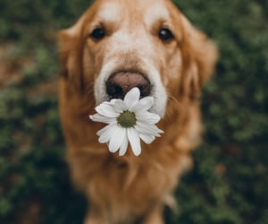 animal, cutie, and flower image